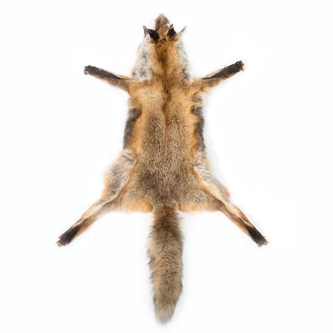 Peau de renard sauvage naturel fourrure renard roux décoration confection tanneur direct tannerie peau de bête grossiste dt collection importateur vente en gros